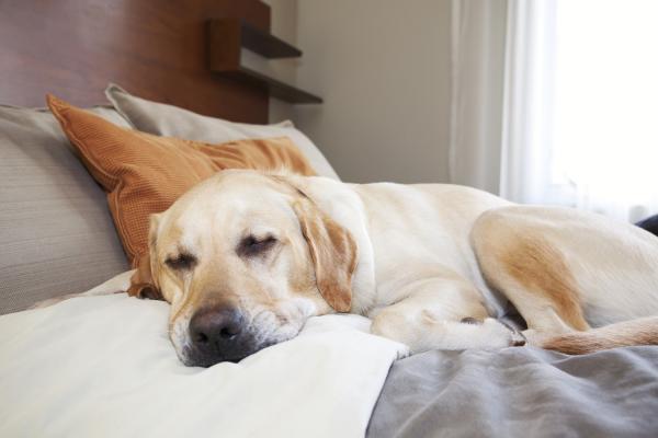 Strutture per viaggi e vacanze pet friendly